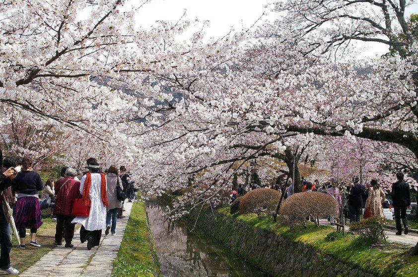 O Caminho do Filósofo, Kyoto - Japão