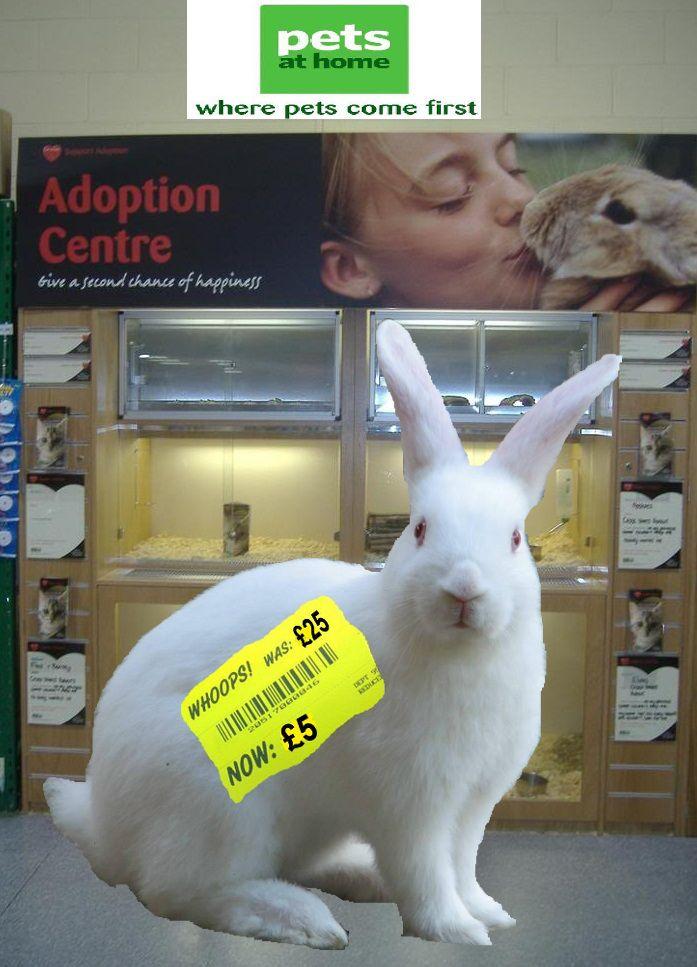 Bargain Basement Buns Pet Rabbit Adoption Pets