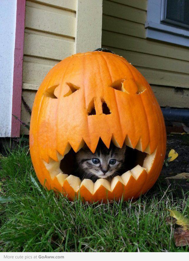 Happy Belated Halloween - goaww.com