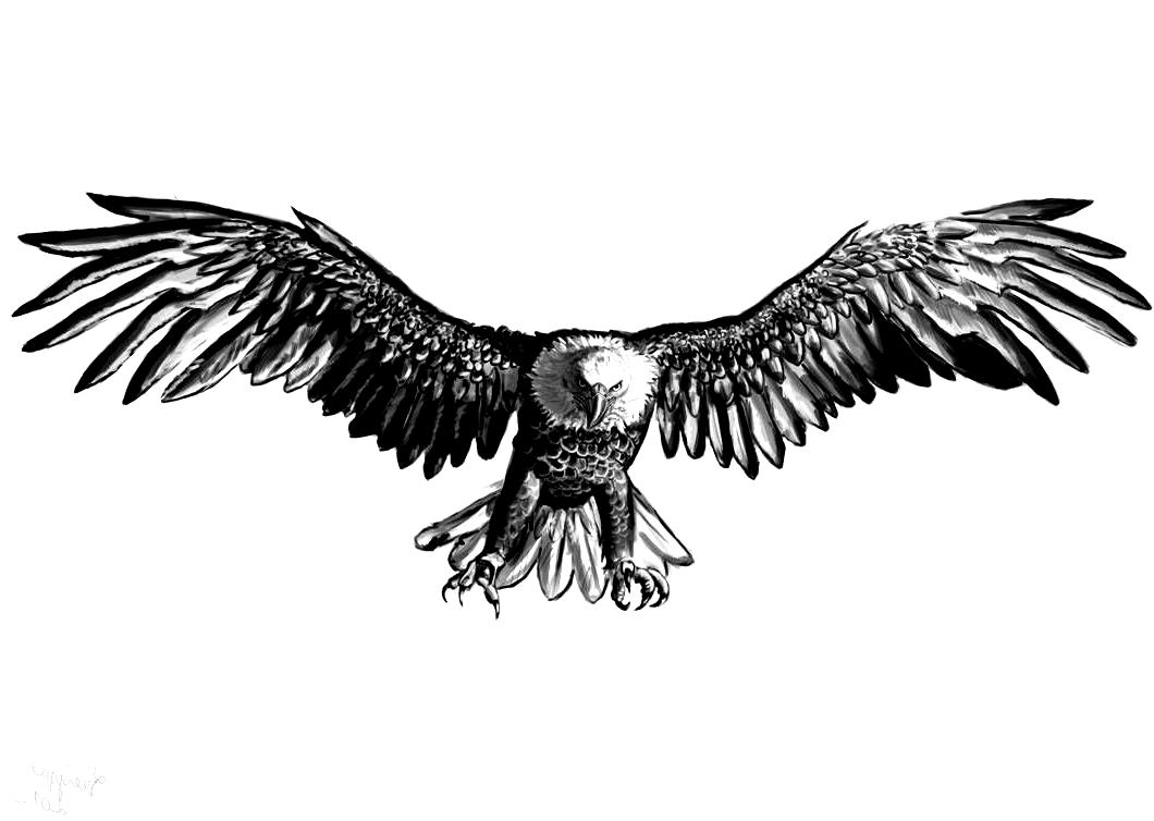 Eagle By X Celebril X On Deviantart Adler