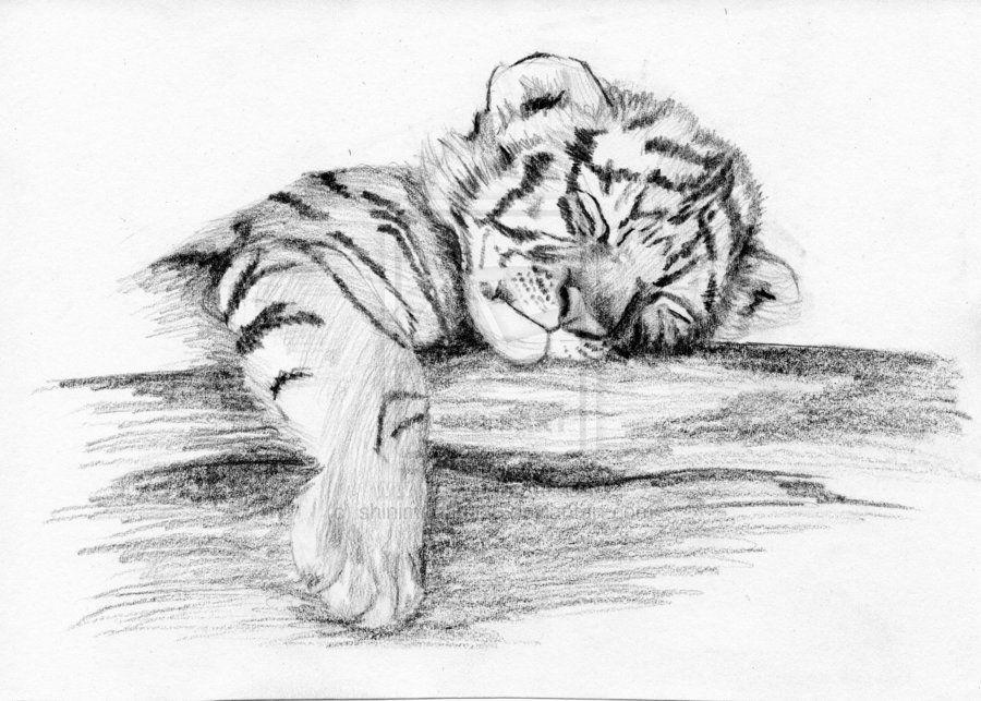 Tigre Sketch: Tiger Cub By ~shinimegami86 On DeviantART