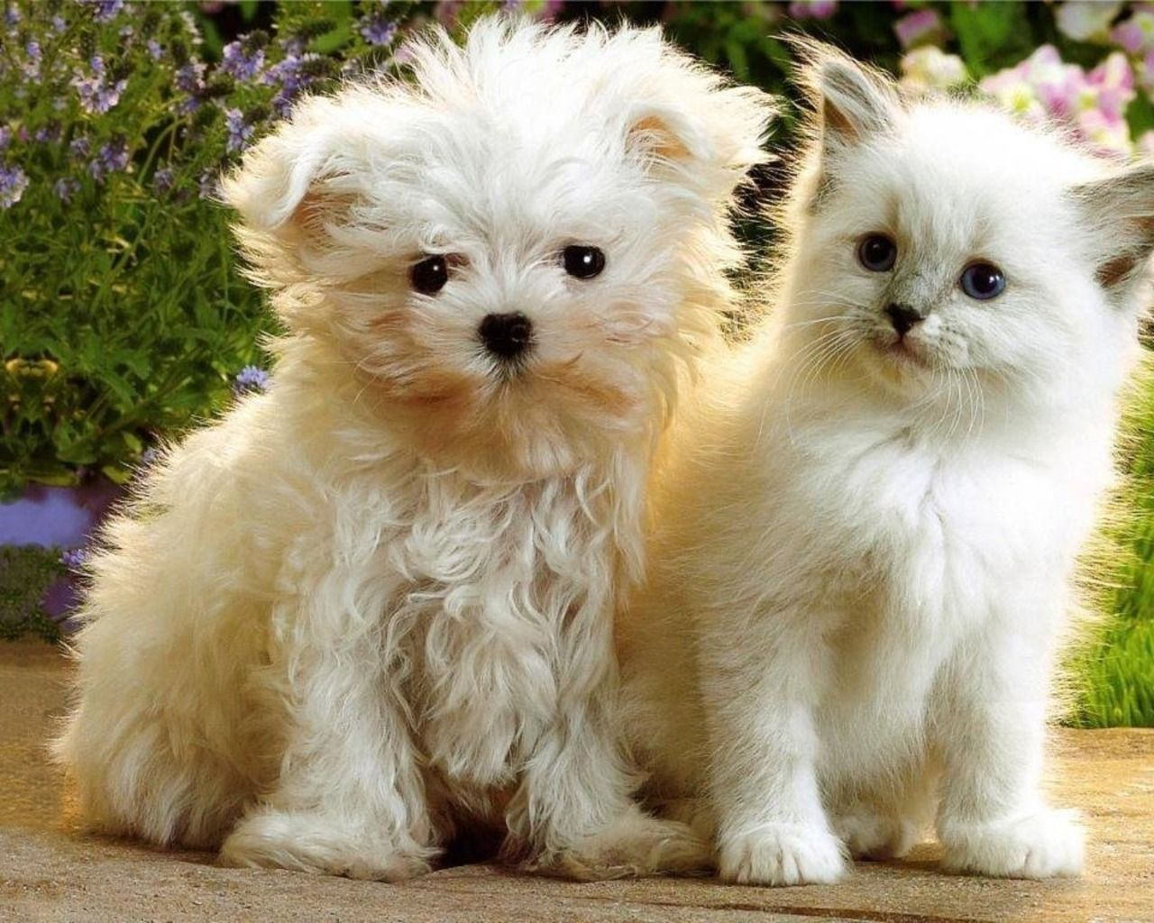 Sweet Babies Cute Puppies And Kittens Cute Cats And Dogs