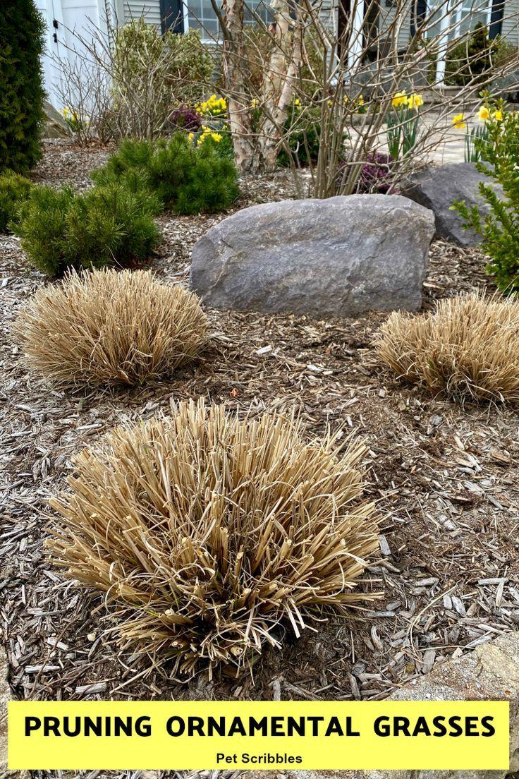 Pruning Ornamental Grasses short, medium, tall Pet