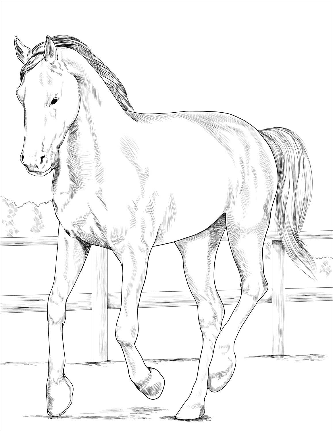 Westphalian Horse Coloring Page Horse Coloring Pages Horse Coloring Animal Coloring Pages