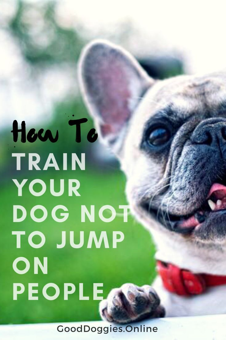 Simple Ways On How To Train Your Dog Not To Jump On People