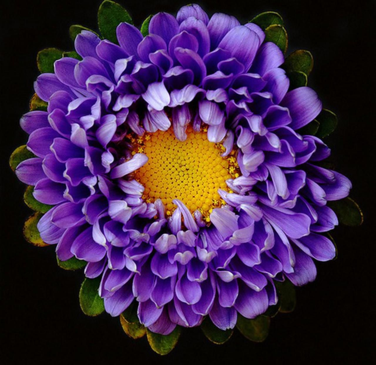 Flower bloom - (#107812) - High Quality and Resolution Wallpapers ...
