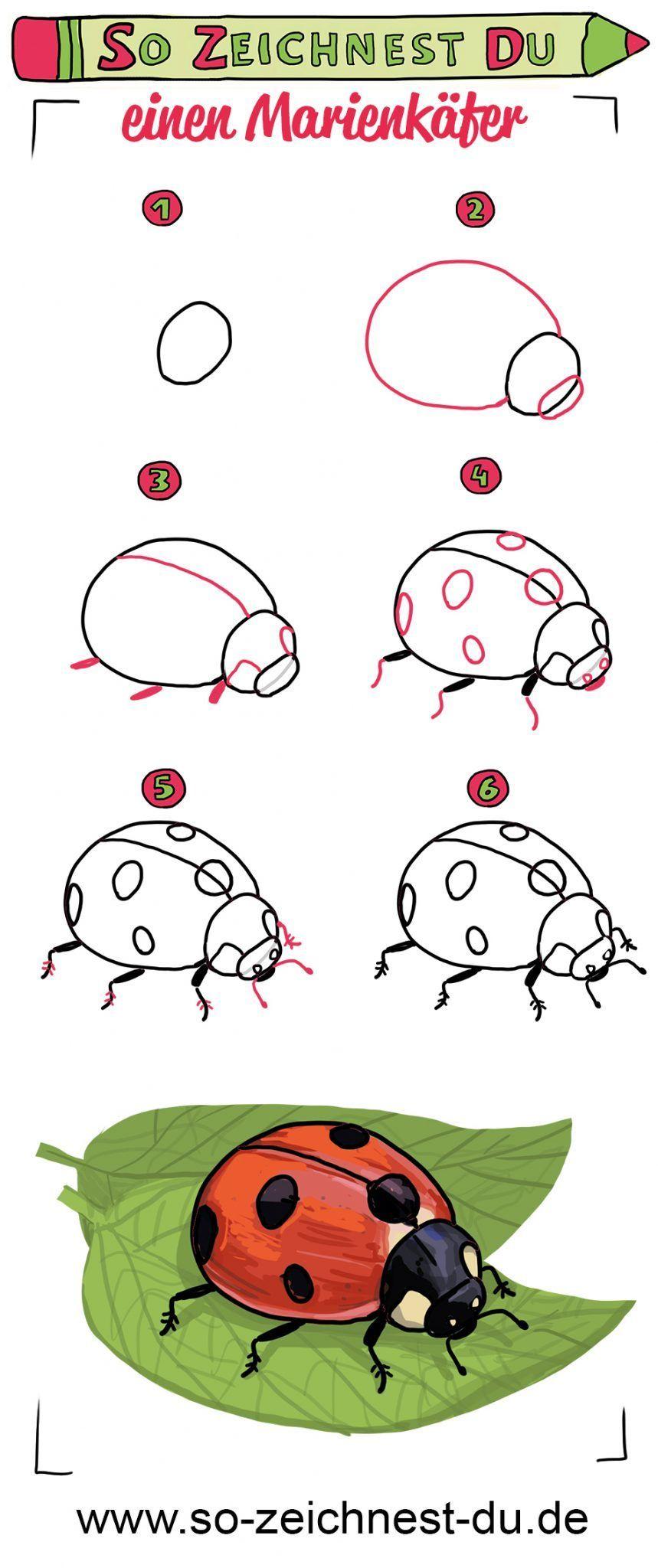 So zeichnest du einen Marienkäfer Glückskäfer