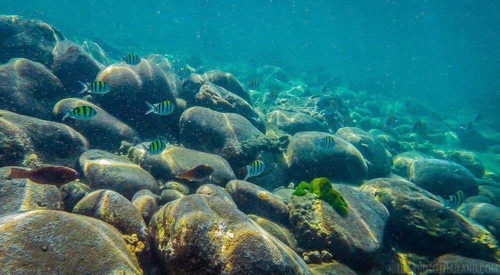 A Beautiful Koh Lanta Snorkeling Experience Lanta