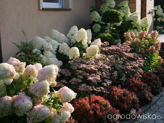 Hortensjada Strona 443 Forum Ogrodnicze Ogrodowisko Front Garden Landscape Flower Garden Design Landscaping Inspiration