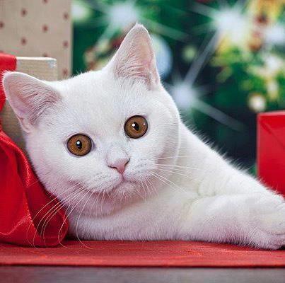Cat Resim & Fotograf