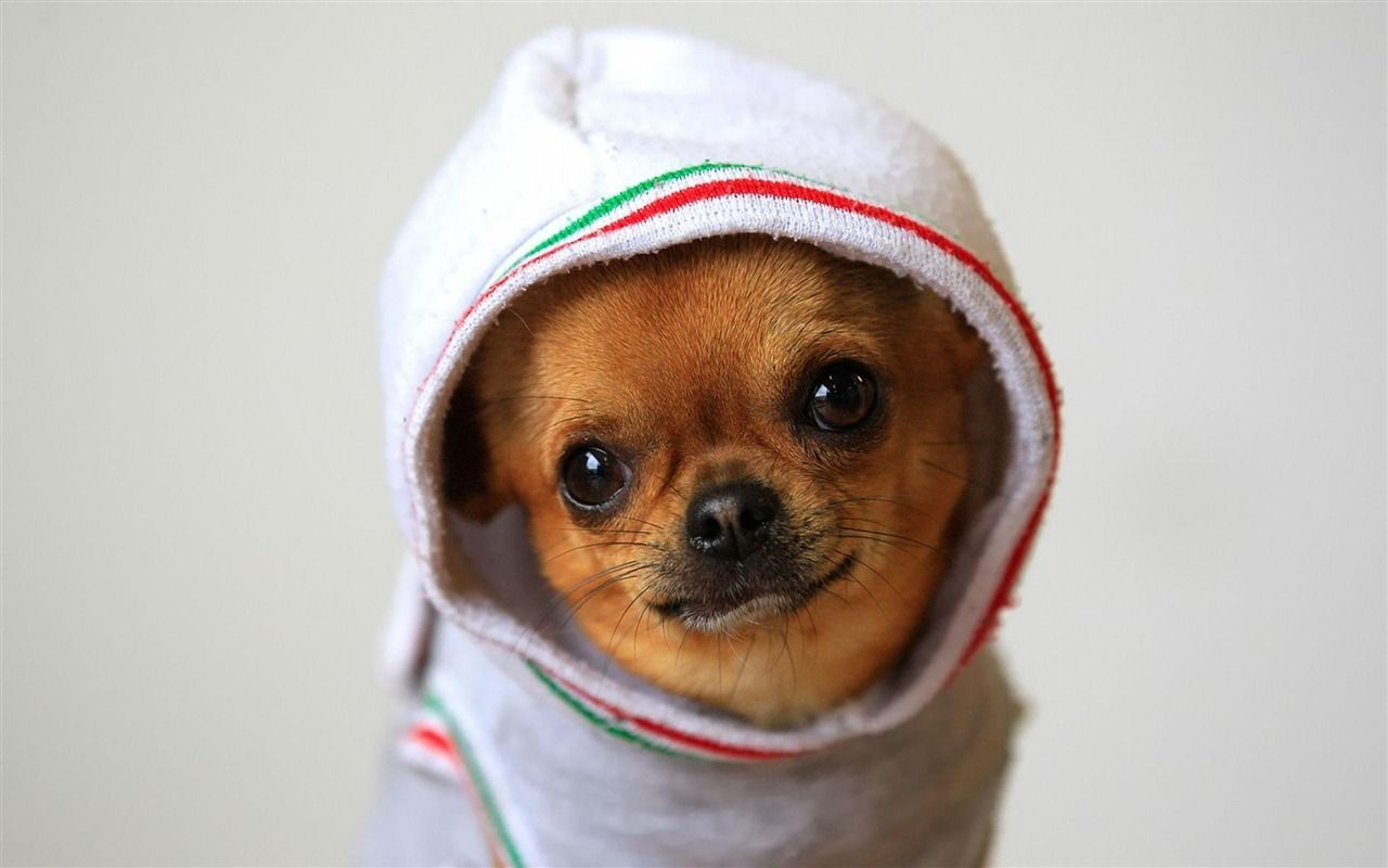 Funny Dogs Wallpapers Wallpaper