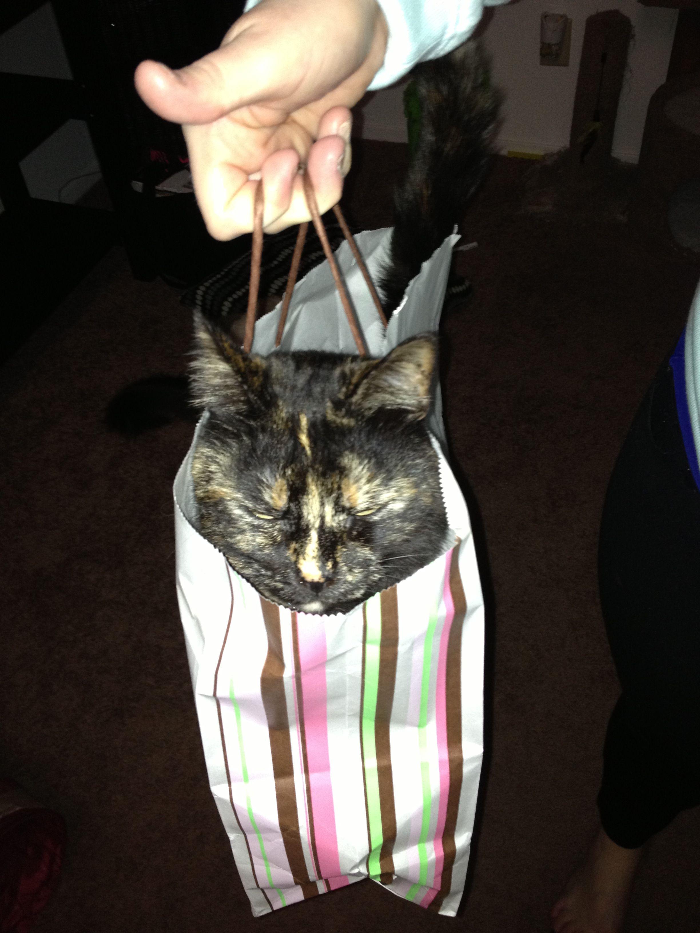 So cute! Torti in a bag. My Kiwi