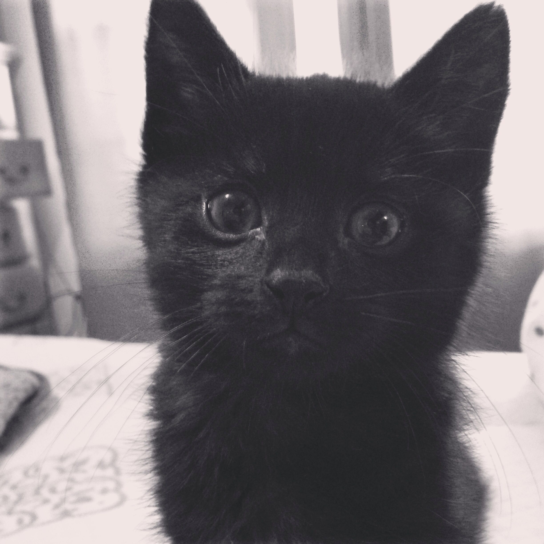 ~My Little Ash~ #BoyKitten #PreciousEyes #LittleWhiskers #Spoiled #Adorable #BlackKitten