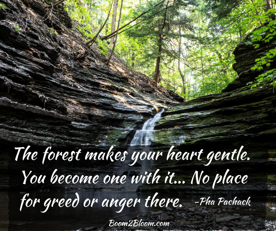 Quotes About Healing Nature Is My Sanctuary Quotes To Inspire & Heal  Quotes .