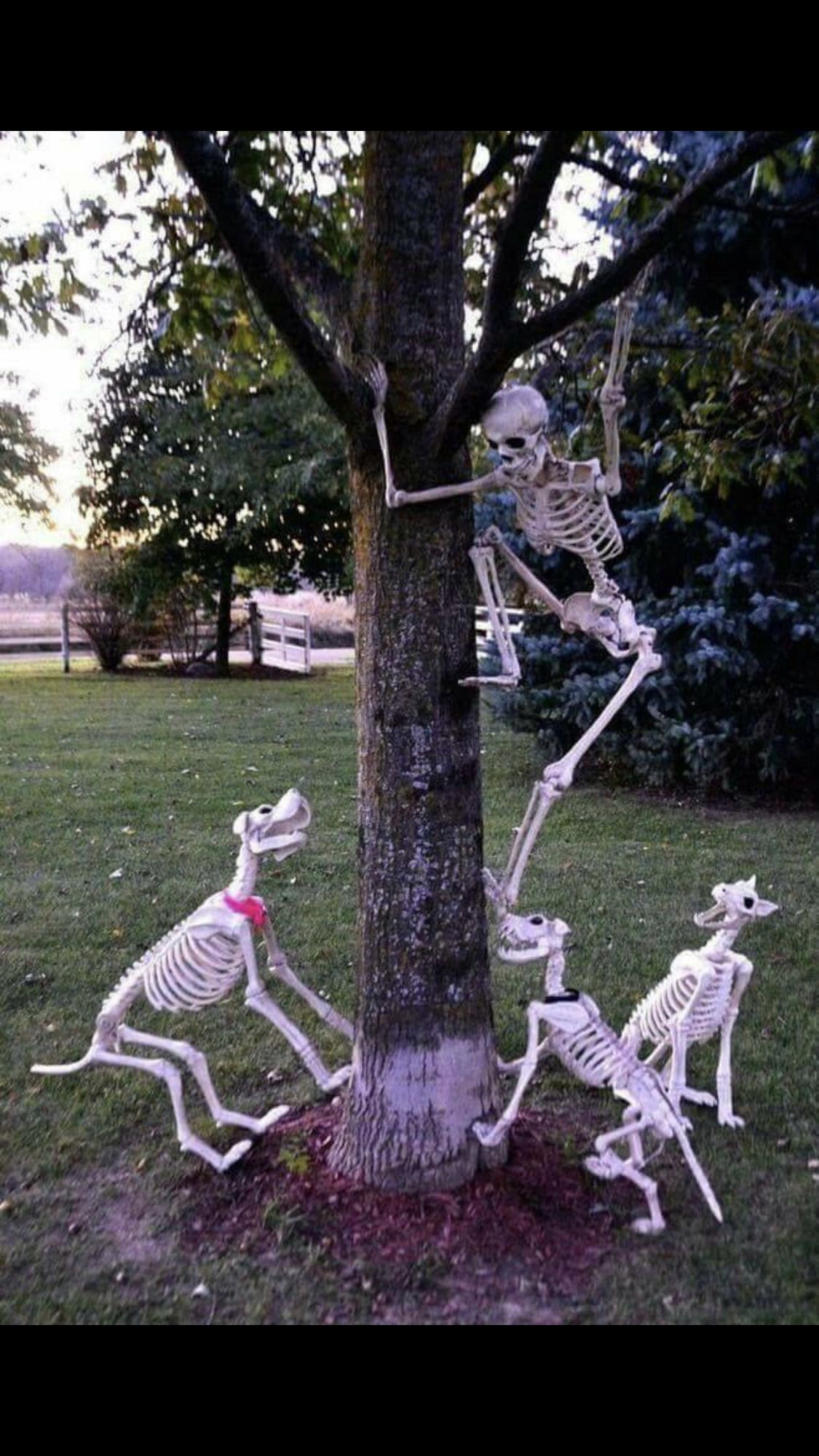 Perfect But Where Can I Find Skeleton Dogs Halloween Outdoor Decorations Halloween Diy Outdoor Fun Diy Halloween Decorations