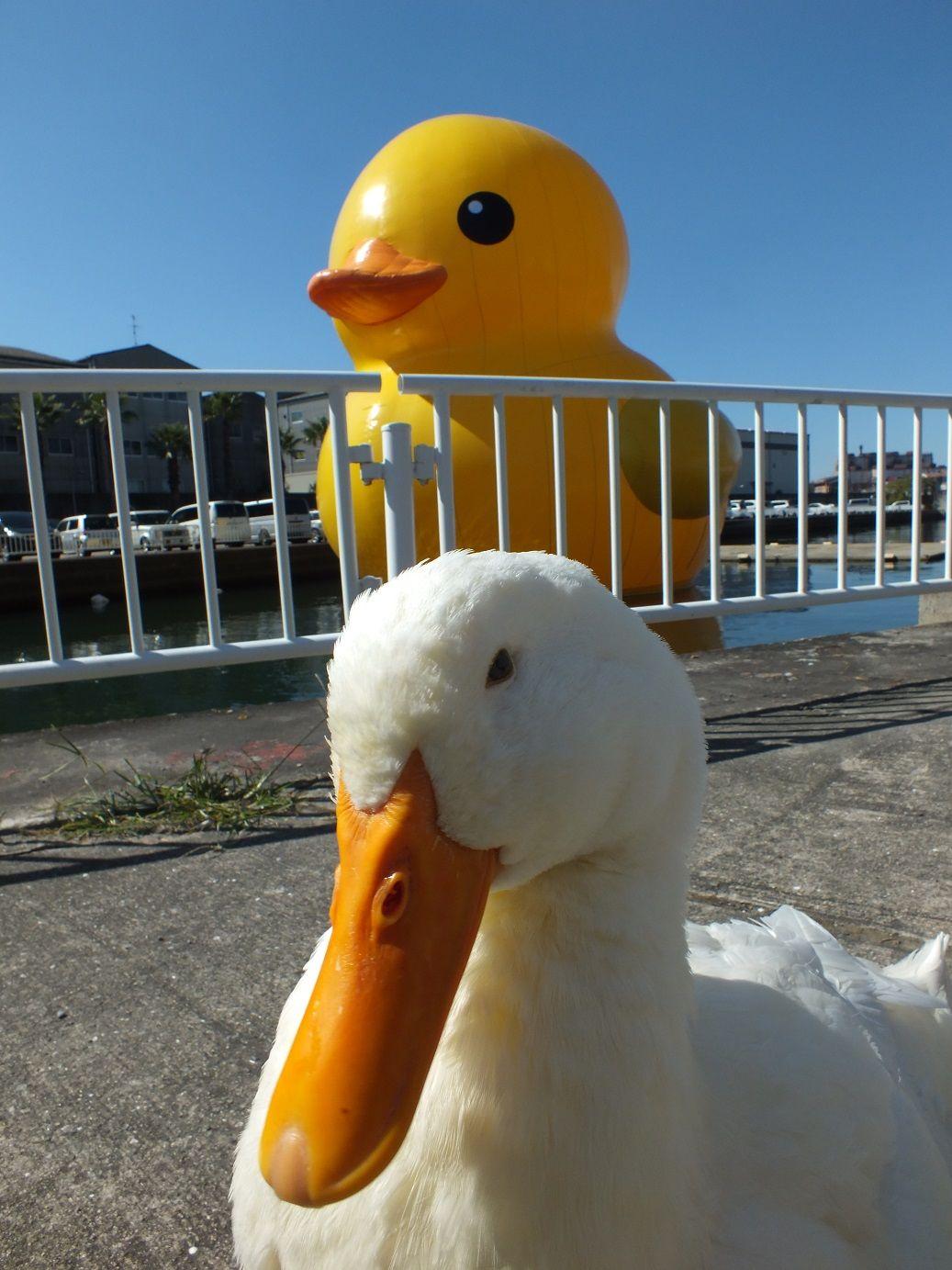 ボード Ducky のピン