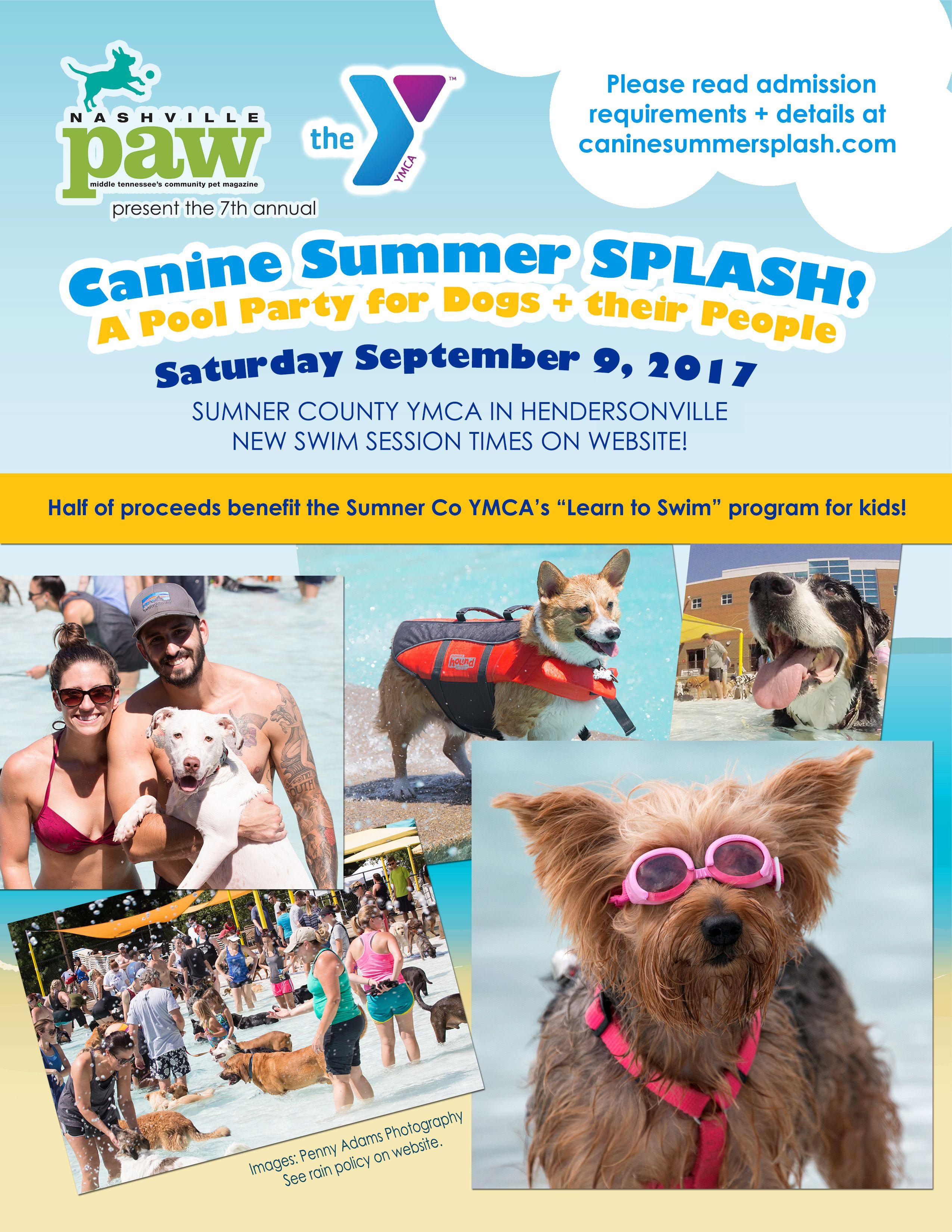 Canine summer splash canine dog swimming dog pool