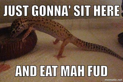 089c198fc3a6dedf30618776fd8f26c4 leopard gecko meme toots \