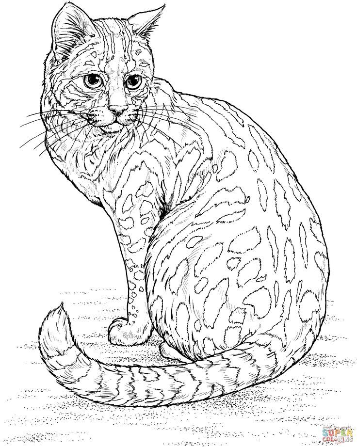 Color Sheets Coloring Pages Of Big Eyed Animals Bestofcoloringcom Cat Animal Page Town