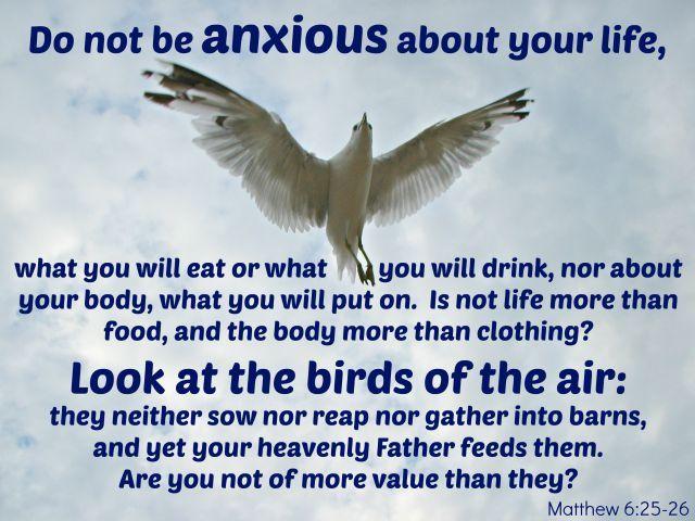 Mymentalhealthin5words Jesus Look At Birds Of Air Matthew 6