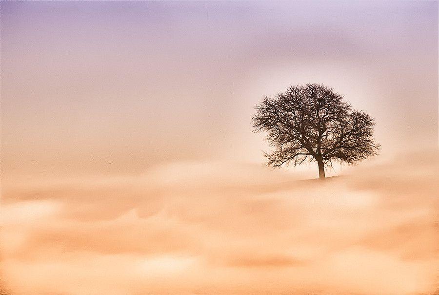 L'albero solitario by Mario Ventura on 500px