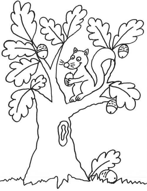 Baume Eichhoernchen Auf Dem Baum Zum Ausmalen Coloring Pages Acrylic Art Drawings