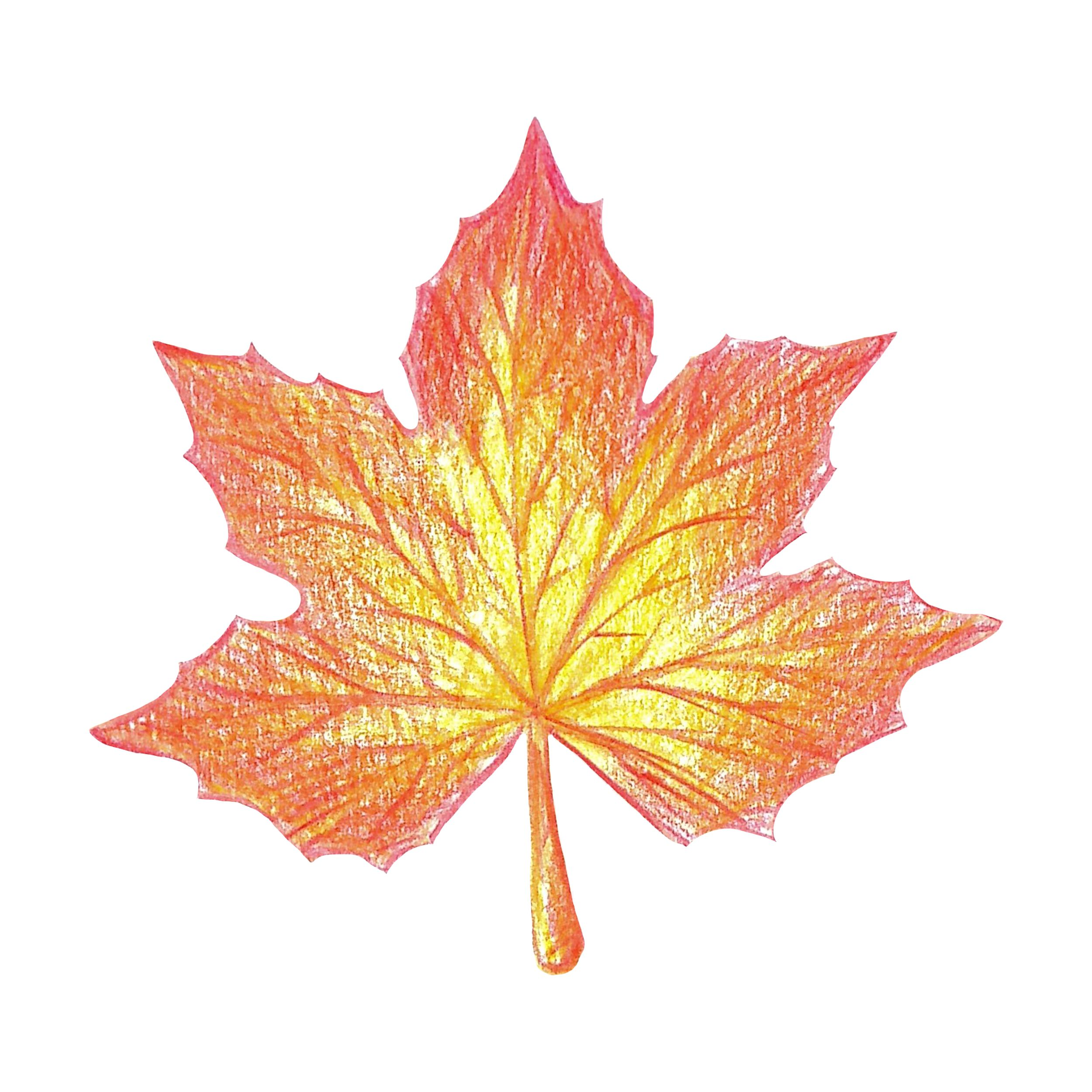 Yellow Red Maple Leaf With Colored Pencils