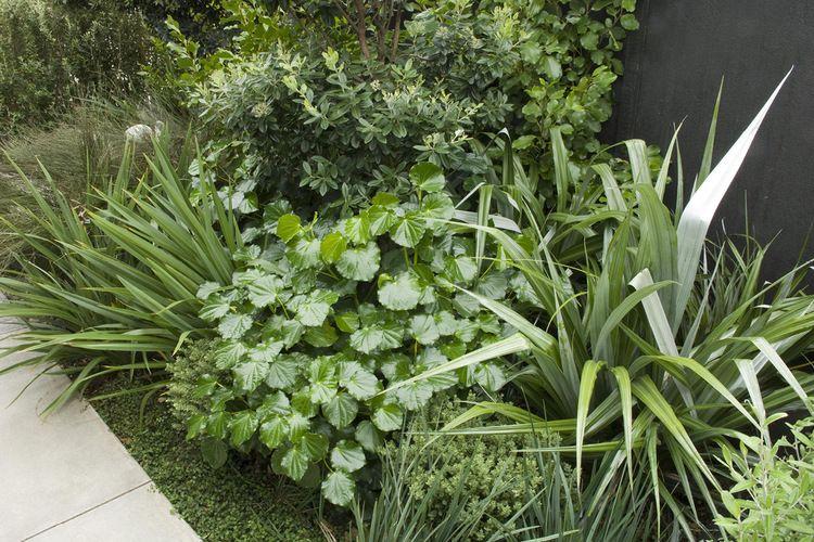 Raumati Coastal garden with shade tolerant, lush native