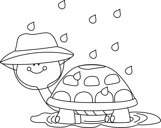 Black And White Turtle Standing In Rain Puddle