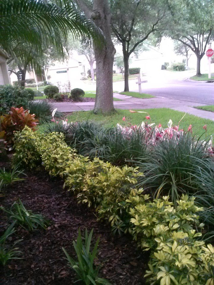 Landscape garden in a shady area using Variegated Arboricola ...