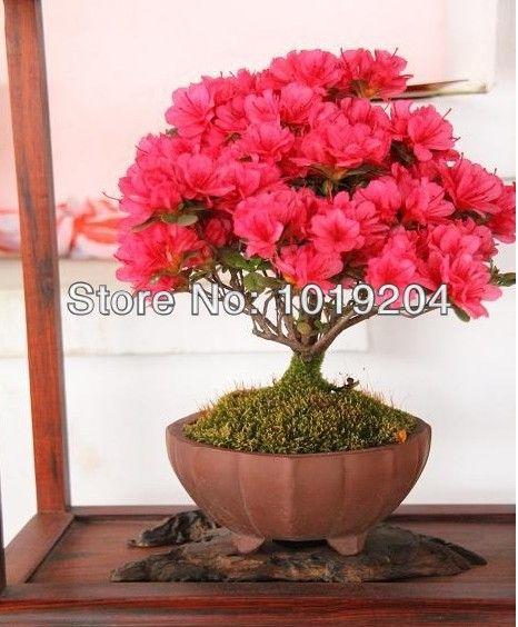 bonsai árvore de flores - Pesquisa Google