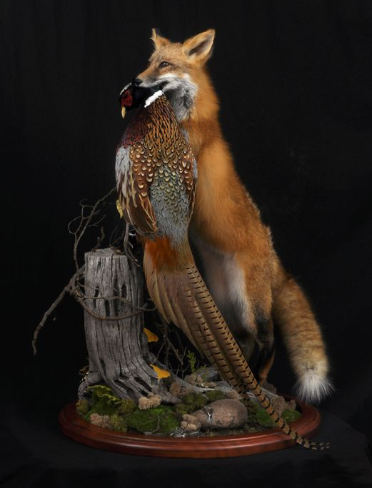 fox_pheas1_lg.JPG (521×684)