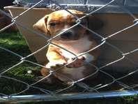 Pomsky puppies for sale in utah ksl
