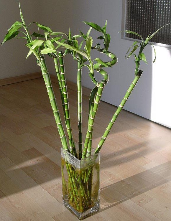 Images Of House Plants | Types Of Bamboo House Plants