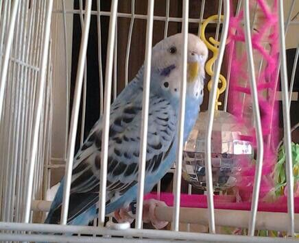 Tweety, yes I'm the one who pulled the bars apart to escape. Shush ! Don't tell my humans, they will try to stop me. I need a boyfriend. Lol
