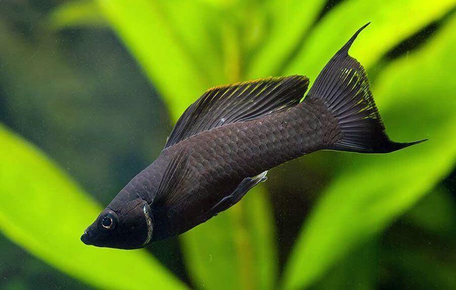 13 Best Algae Eaters For Your Aquarium Keep The Aquarium Clean Aquarium Eater Fish Pet