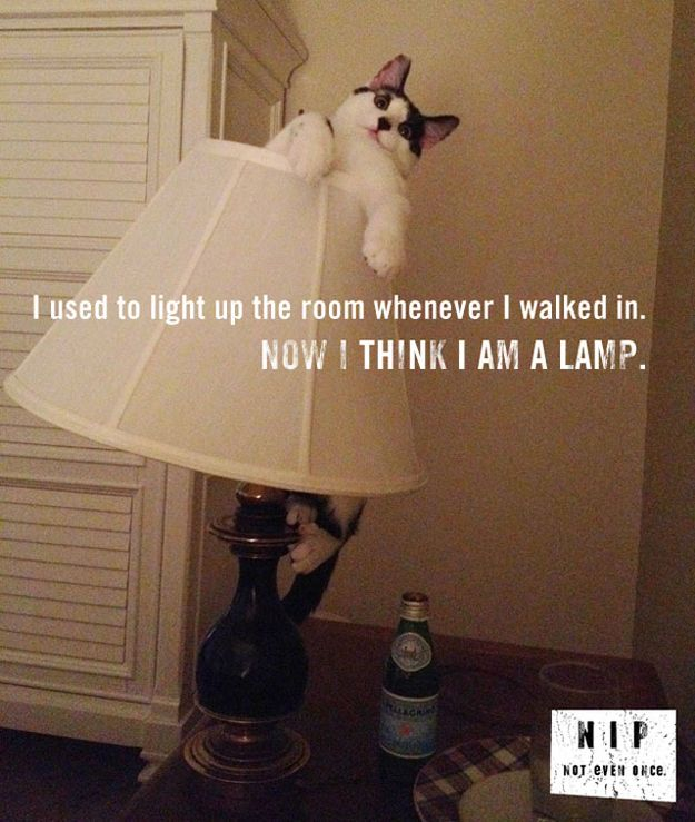Check out Mind games... from Hilarious CatNip PSAs Funny