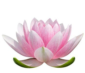 Lotus flower meaning 3 watercolor art pinterest lotus flower lotus flower meaning 3 mightylinksfo Choice Image