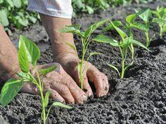 Marc de café : 4 astuces pour votre jardin !