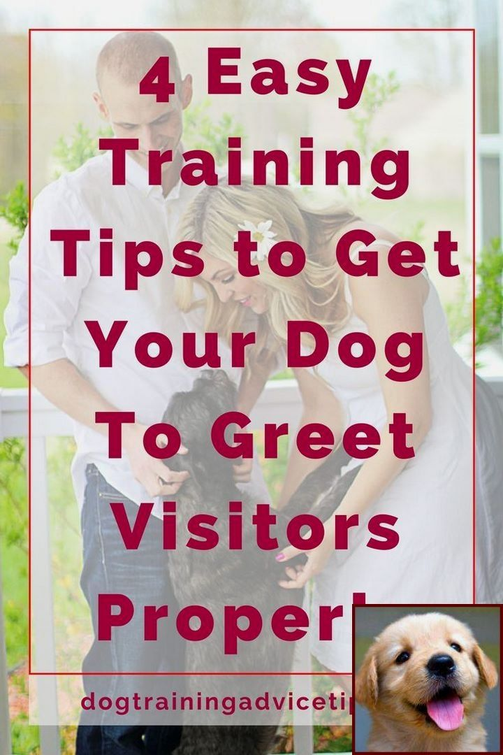 Dog behavior nipping at heels and clicker training for