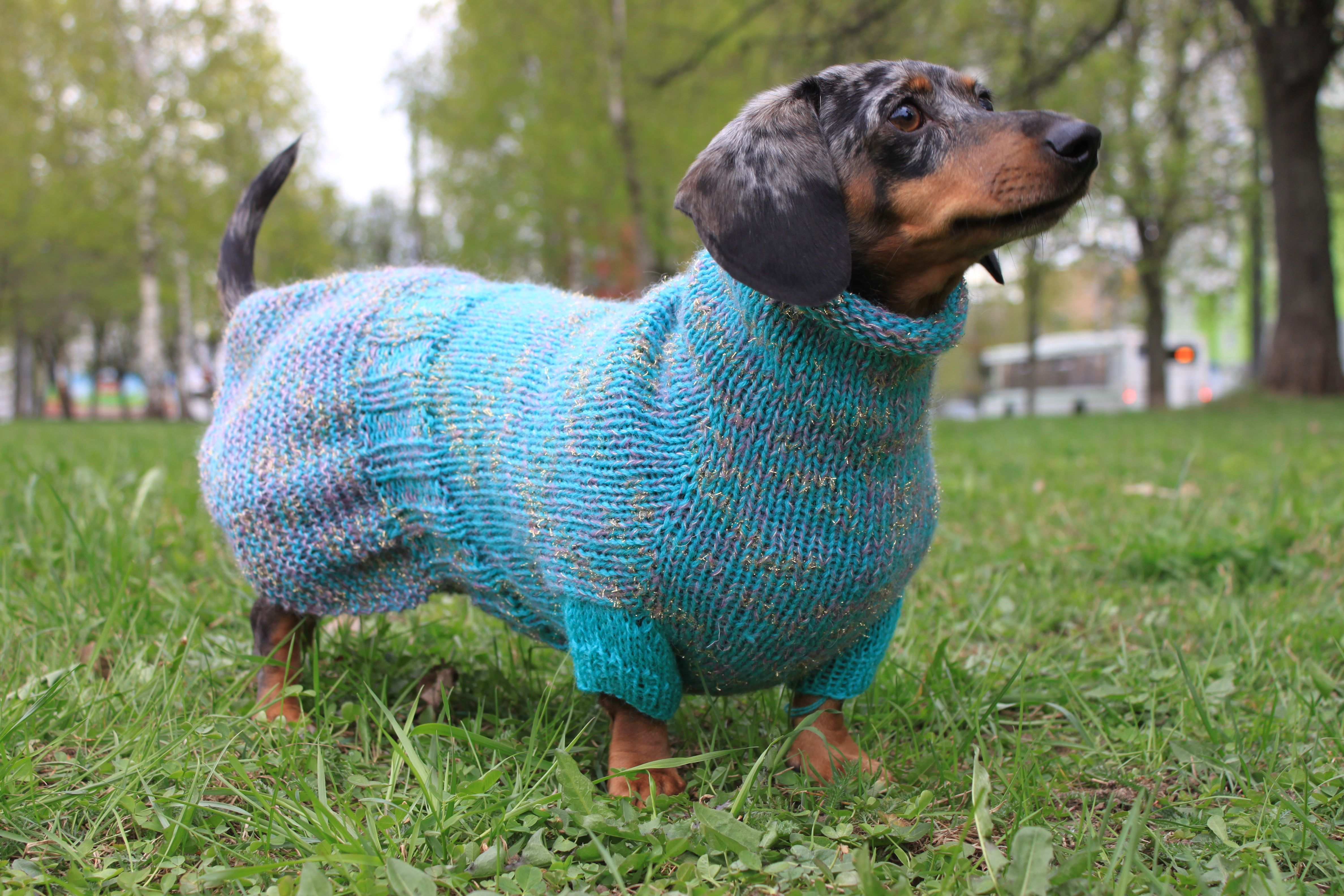 Knitting Pattern Mini Dachshund Seamless Dog Sweater Kint Dog