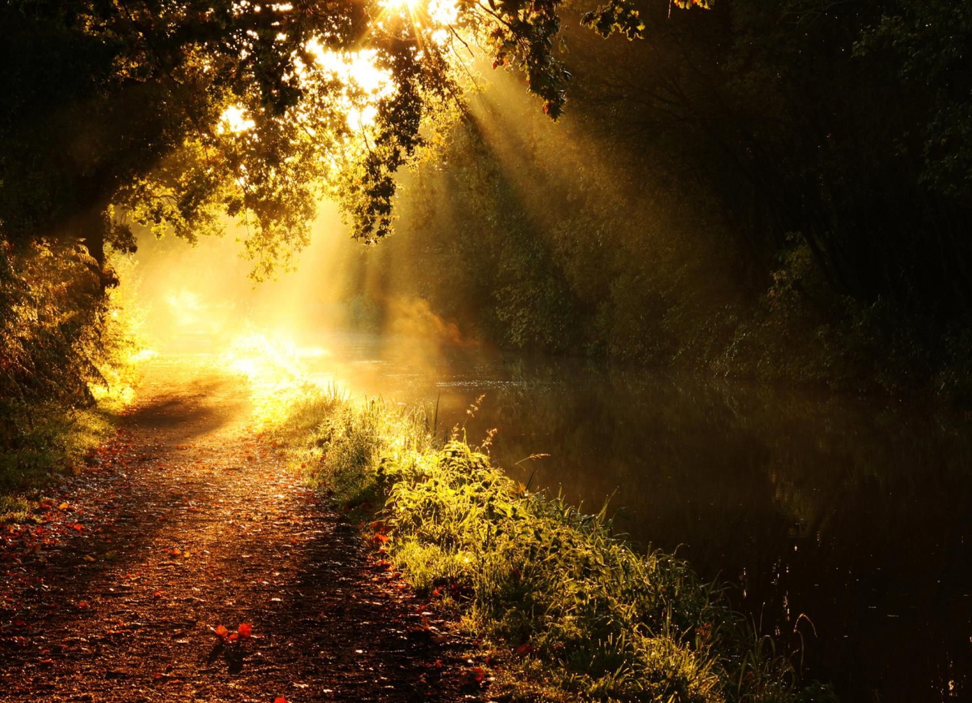 Morning Sunlight Morning Sun Wallpaper Download Free Widescreen