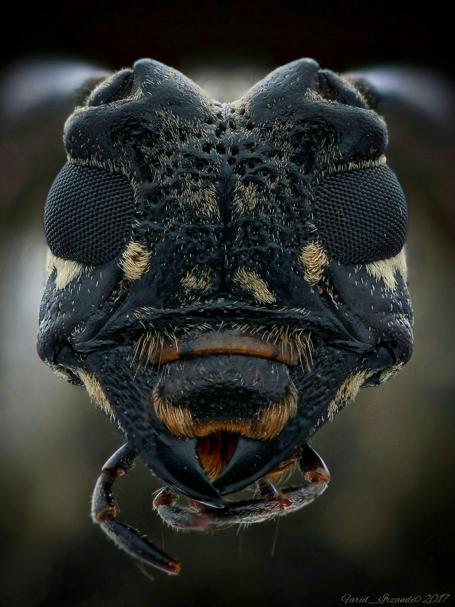 Longhorn Beetle Amphibien Insekten Reptilien