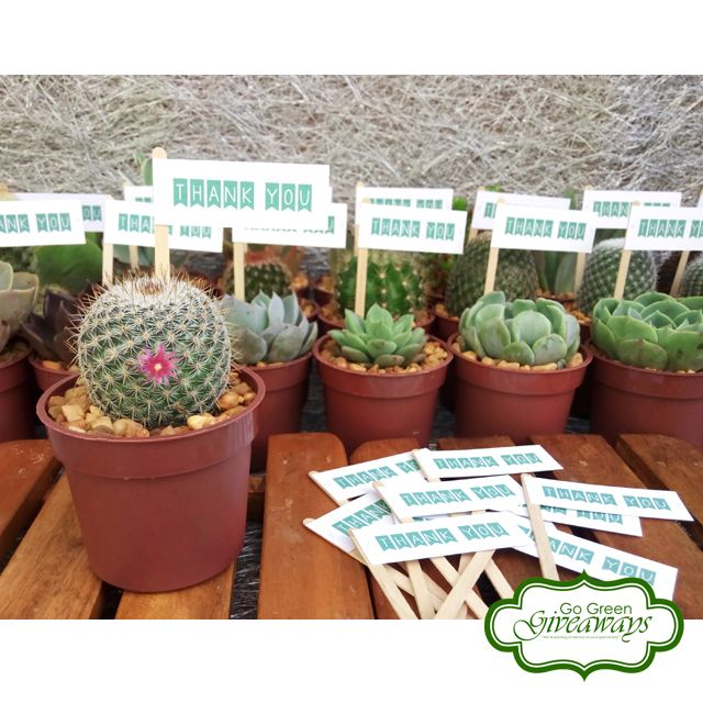 Wedding Theme Ideas Philippines: Pin By Go Green Giveaways On Cactus Wedding Giveaways