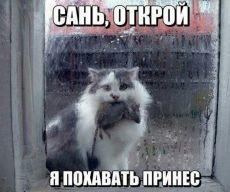 Почему кошки приносят хозяину домой убитых ими животных?