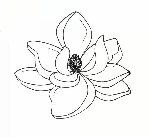 180cb9d957a954c2a5a80750c9db0f5f Jpg 604 553 Flower Drawing Flower Line Drawings Magnolia Tattoo
