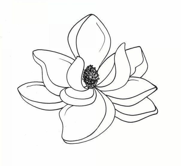 Southern Magnolia Vintage Clipart Clip Art Flower Clipart Magnolia Flower