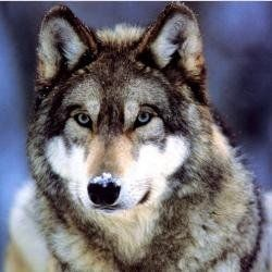 Do you know where these top 10 most beautiful, gorgeous, handsome, cutest, prettiest Dogs on the planet earth came from? Dogs are believed to...