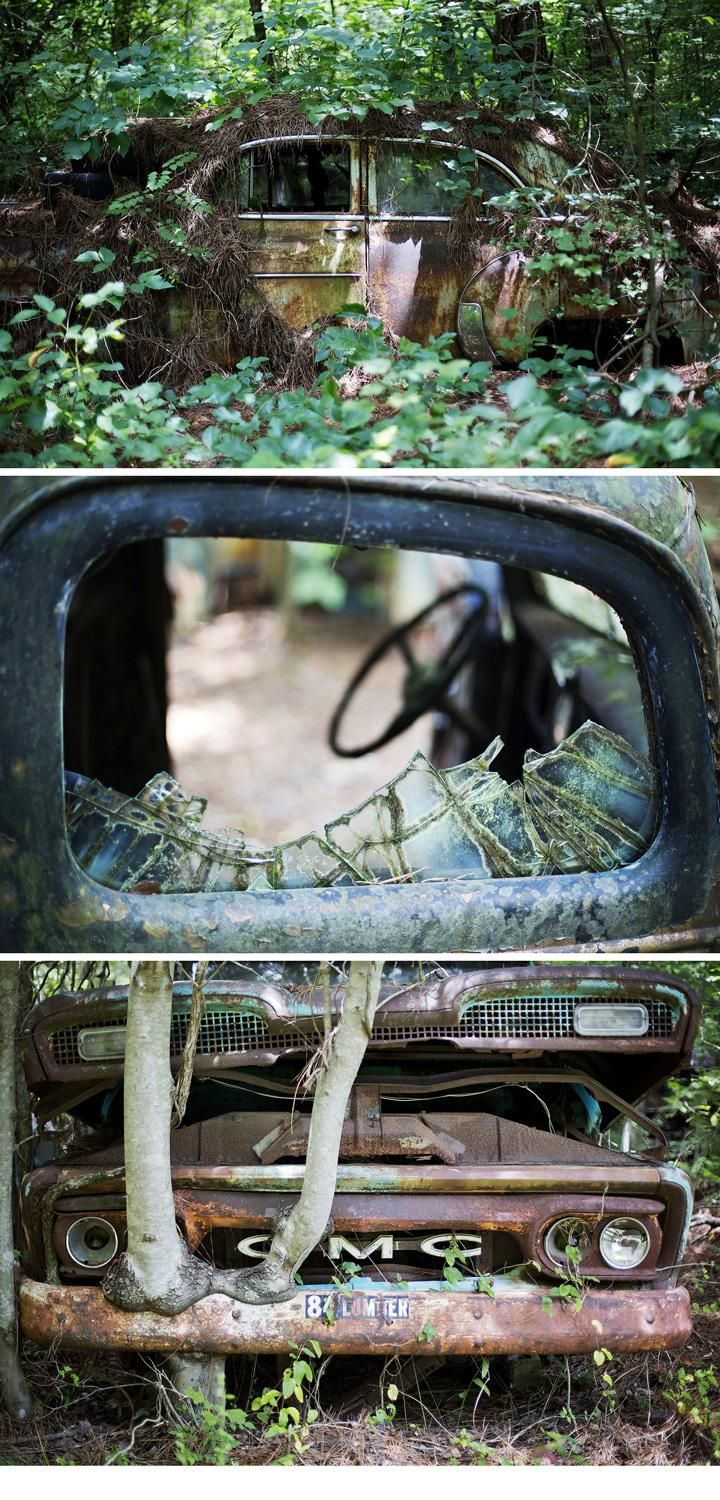 World\'s largest classic car junkyard is becoming part of the forest ...
