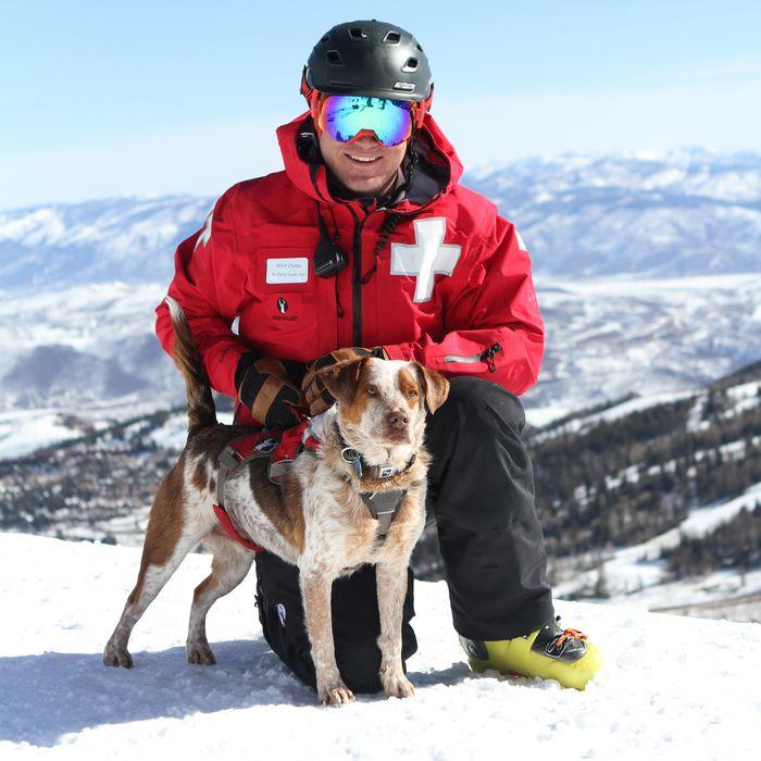 Image result for deer valley ski patrol dogs